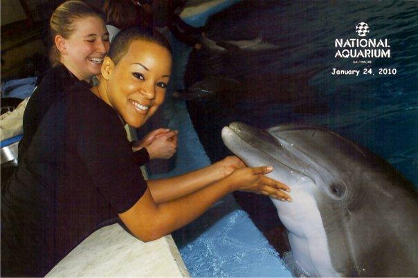 Dolphin 1